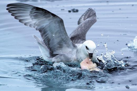 Vogel im Wasser